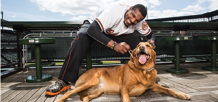 Baltimore Orioles pose with their dogs for a pet calendar.